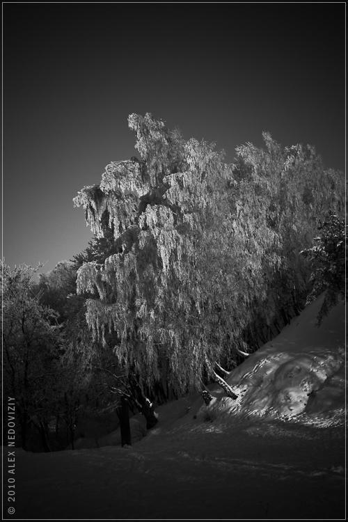 Fairy tale © 2010 Alex Nedoviziy
