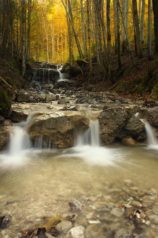 Шипіт альпійський, потрійний. Баварія. Німеччина © 2014 Alex Nedovizii