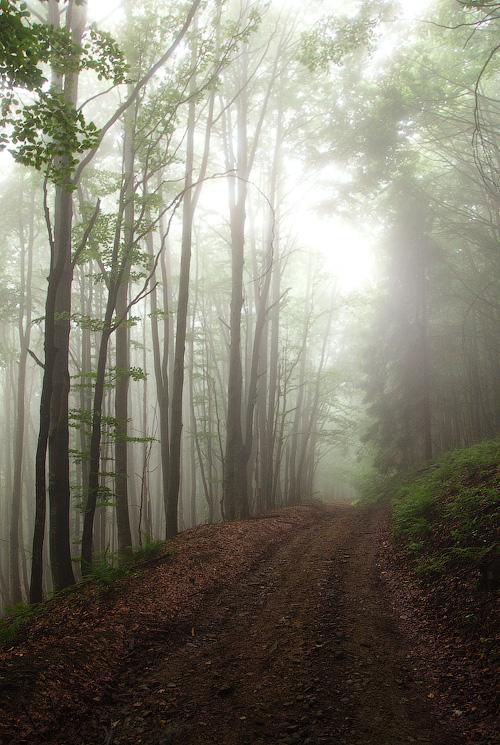 У лісі, лісі темному... © 2013 Alex Nedovizii
