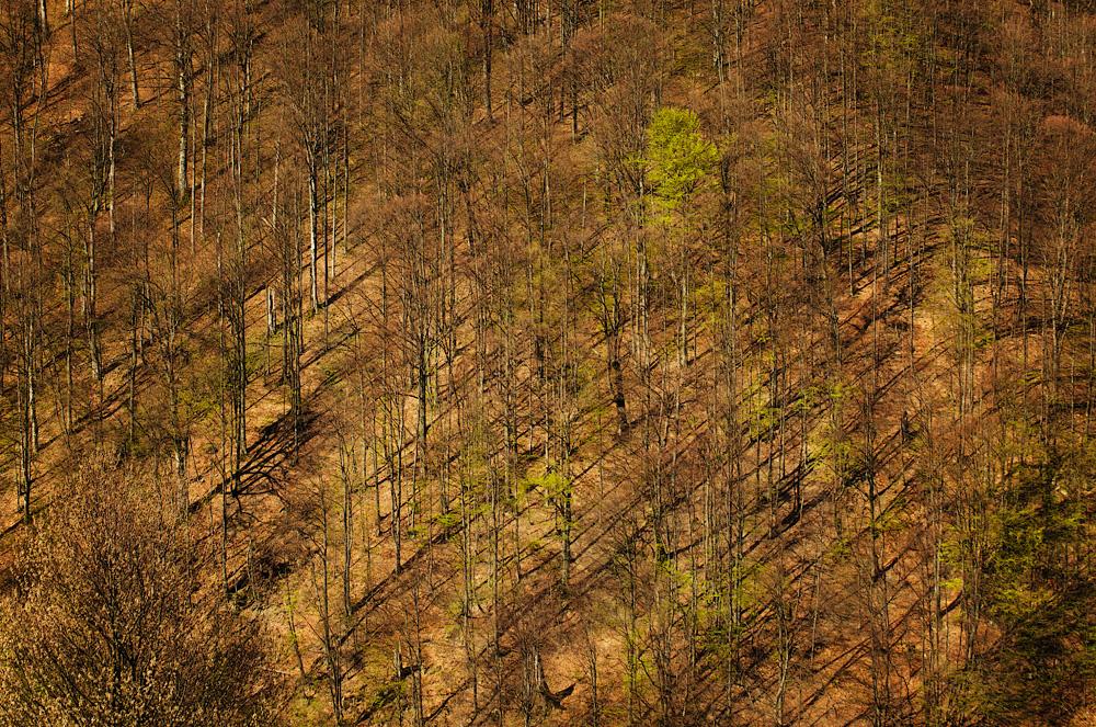 Весняний ліс. Закарпаття, Україна © 2014 Alex Nedovizii