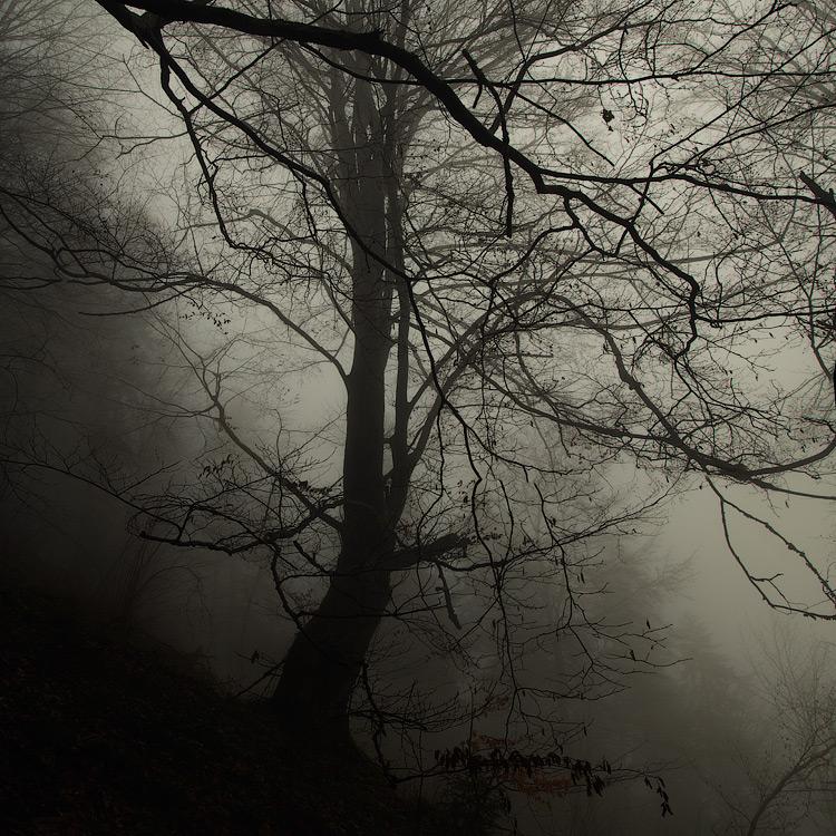 У лісі, лісі темному... © 2014 Alex Nedovizii
