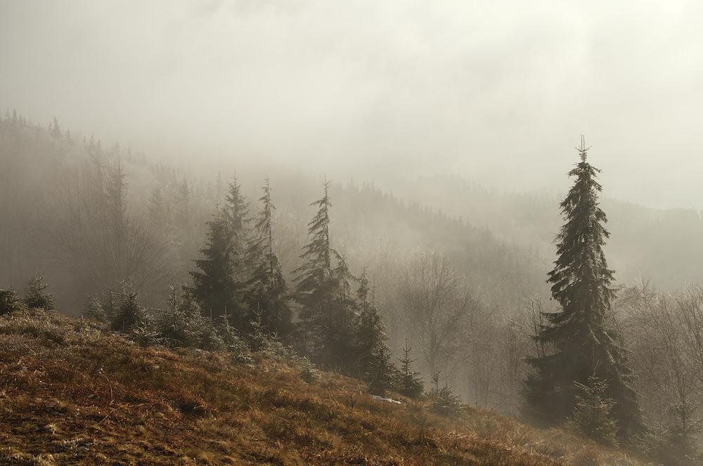 Туманна весна на пасмі Парашки. Львівська область, Україна © 2014 Alex Nedovizii
