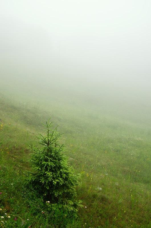 Йолка в тумані © 2013 Alex Nedovizii