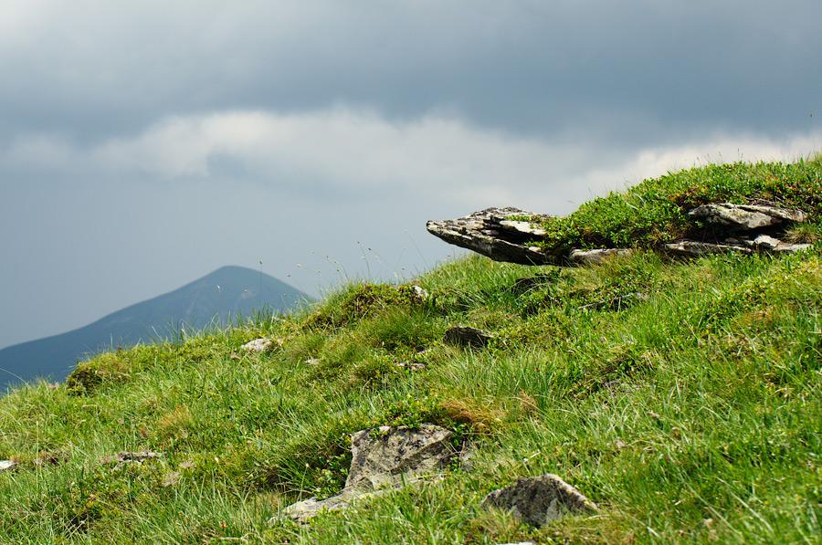 Черепаха карпатська, скам'яніла © 2013 Alex Nedovizii