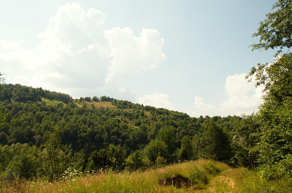 Теплий літній день. Карпати. Україна © 2014 Alex Nedovizii