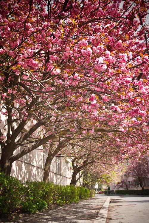 Весна в Ужгороді © 2012 Alex Nedovizii